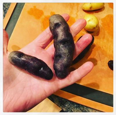 poop, potatoes, middle school