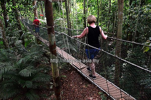 Taman Negara Canopy Walking
