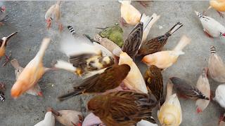 Harga Tiket Masuk Taman Burung Palembang