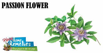 Home Remedies For Bipolar Disorder: Passion Flower