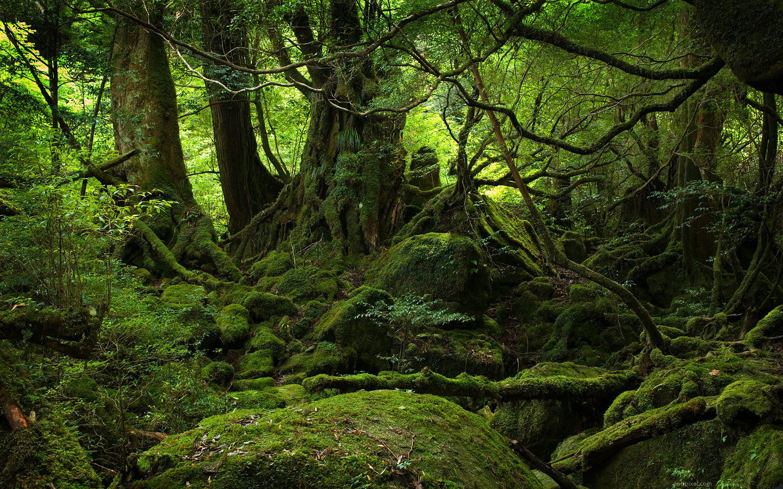 Forest ~ Jungle World