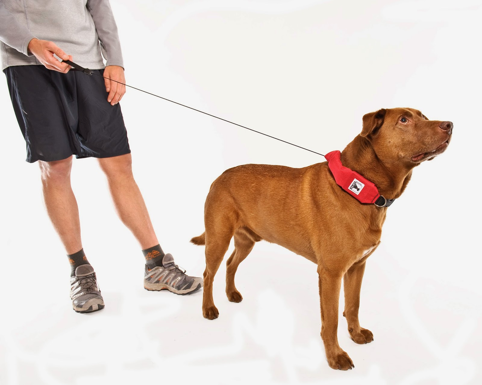 retractable leash and collar in one
