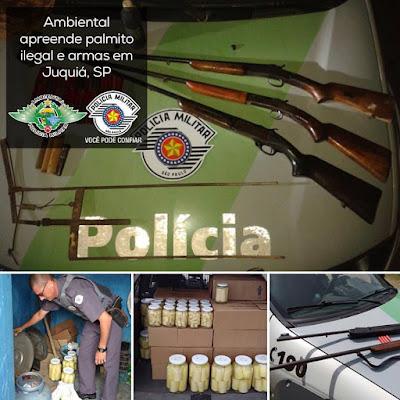 Policia Ambiental apreende Palmito ilegal e armas em Juquiá