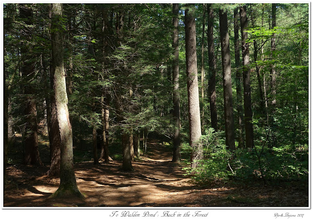 To Walden Pond: Back in the Forest