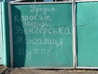 Межевая. Ул. Грушевского. Объявление на воротах о продаже поросят