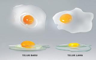 kualitas telur yang lama encer