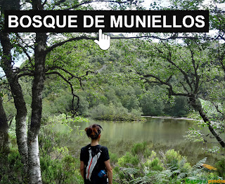 Bosque de Muniellos