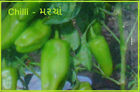 Chilli Vegetable Seeds Ahmedabad