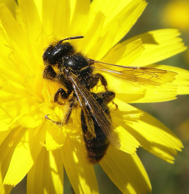 Widespread losses of pollinating insects in Britain