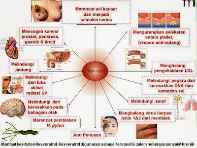 Manfaat Resveratrol