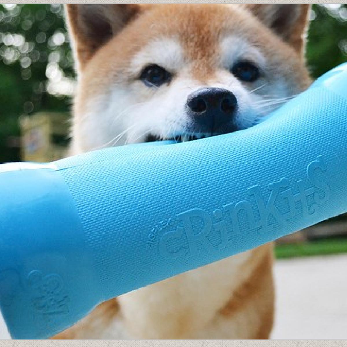 Crinkit est un étui qui permet au chien de s'amuser avec une bouteille d'eau vide.