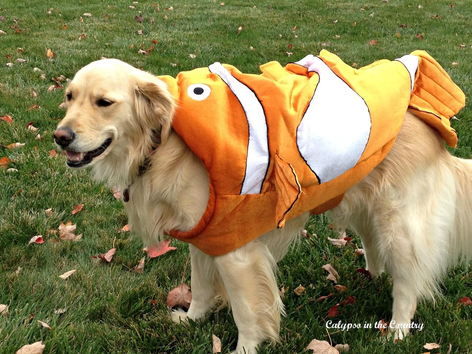 Nemo Costume for dogs
