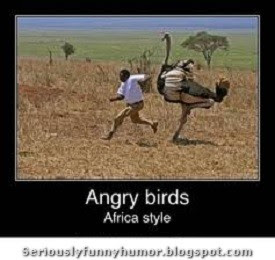 Angry Birds - Africa Style!