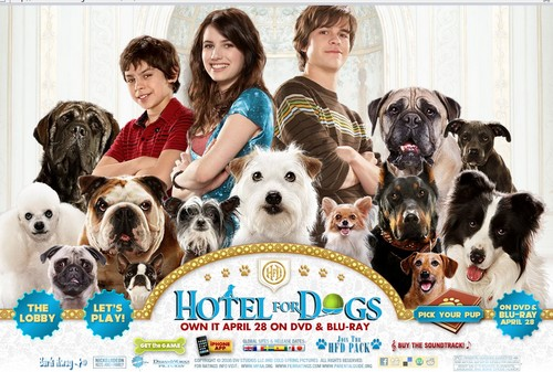 Eclectic Boredom Delayed Reaction Hotel For Dogs
