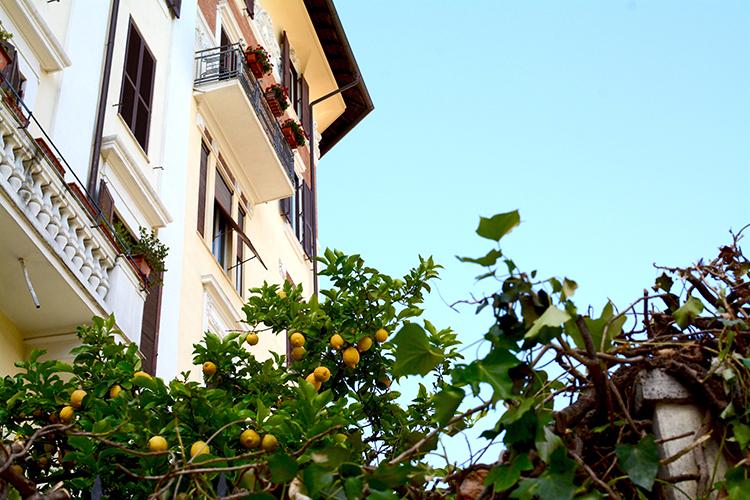 Lemons in Rome