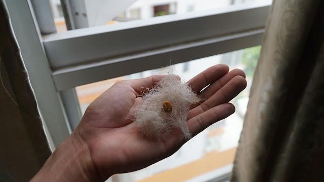Mỗi ngày quét nhà 2 lần, lần nào cũng nhiều lông rụng thế này