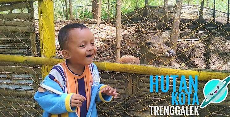 Hutan Kota Trenggalek, Wisata Alam Untuk Keluarga