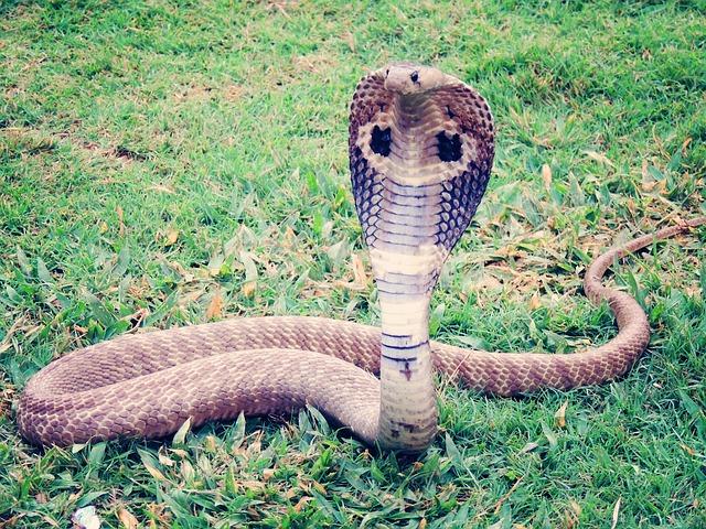 dangerous-animals,most-dangerous-animal-in-the-world,deadliest-animals