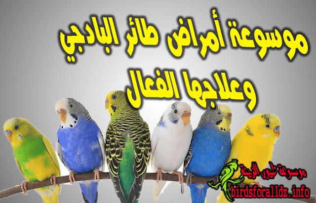 امراض طائر البادجي اسبابها وعلاجها الفعال
