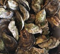 big rock oysters cape cod