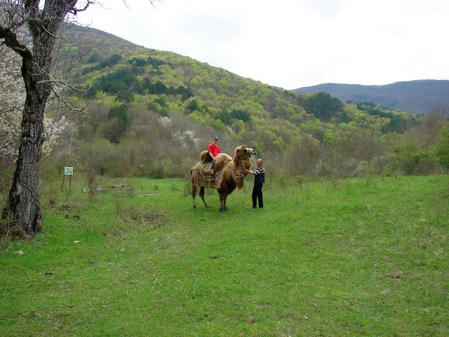 Катание на верблюде возле нашей турстоянки