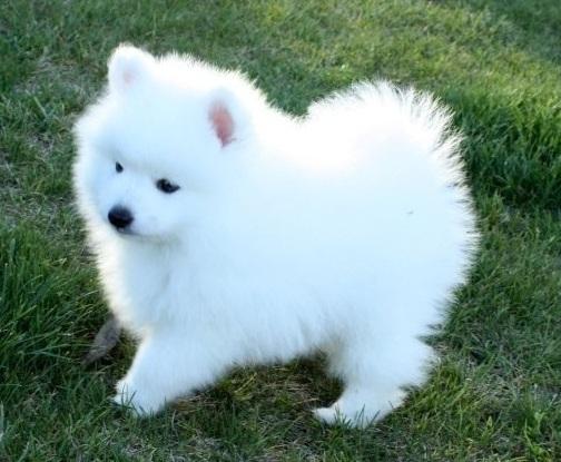 Egy Dogs