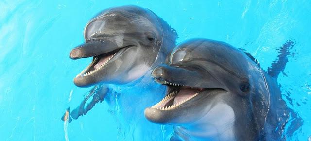 Shows e atrações no Miami Seaquarium: o maior aquário da Flórida