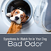 Symptoms To Watch For In Your Dog: Bad Odor