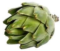 Foto de la alcachofa color verde
