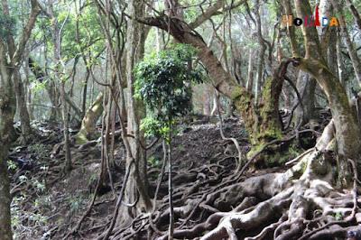 Rich forest near devil's kitchen