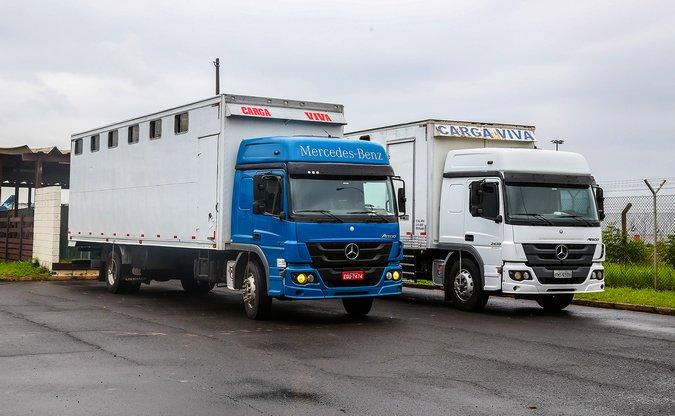 28ea0c910bc Caminhões Atego transportam 40 cavalos da jovem equipe de salto que  representará o Brasil no Chile