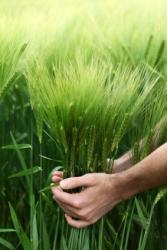 Ποιοι παράγοντες επηρεάζουν την συντήρηση των τροφών