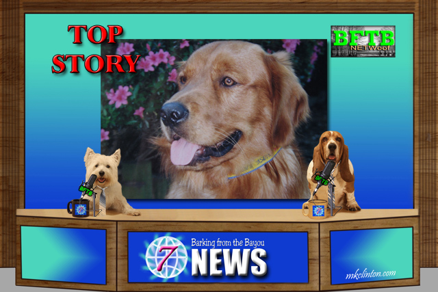 BFTB NETWoof News top story: Golden Retriever on backdrop
