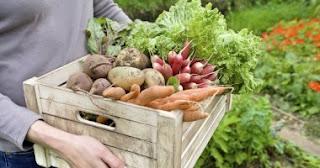 أسعار السلع الغذائية الضرورية من فاكهة وخضراوات ولحوم ودواجن وأسماك وبقوليات
