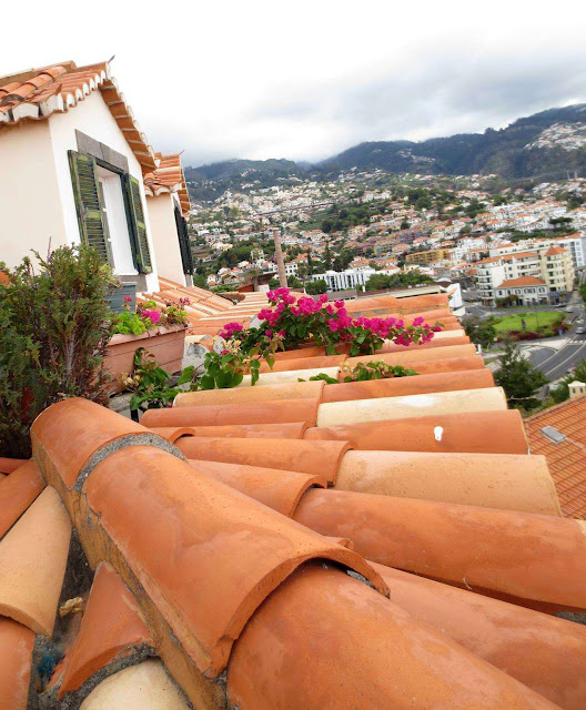 roofs with flowers