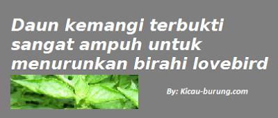 manfaat daun kemangi untuk lovebird