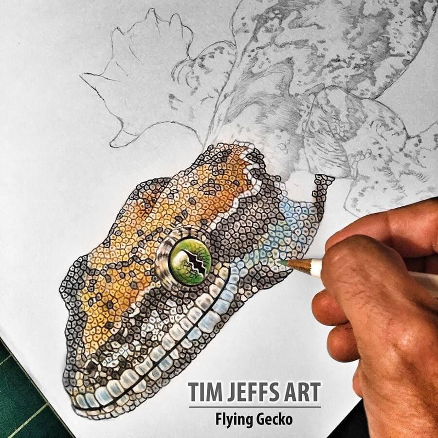 08-Flying-Gecko-Tim-Jeffs-www-designstack-co