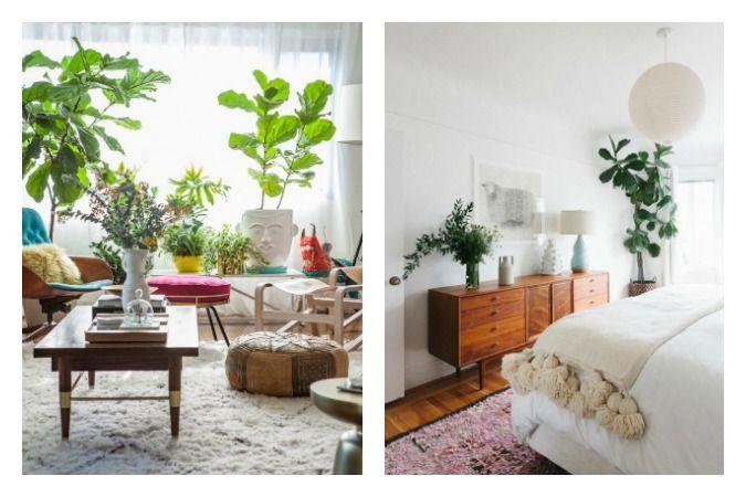 plantas de interior de gran tamaño en decoración de hogares