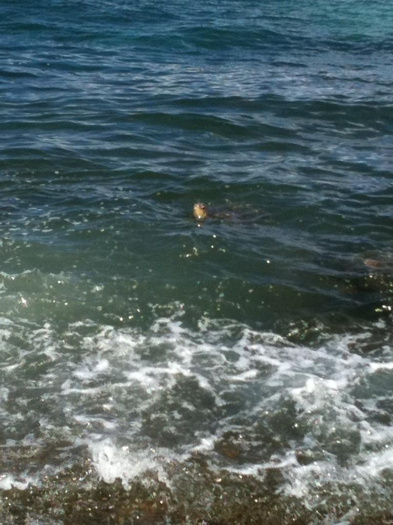 Art + Word: Snorkeling At Shark's Cove & Sea Turtles At