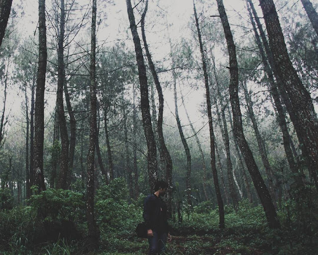 foto hutan pinus di coban talun malang
