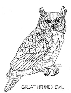 Great Horned Owl Coloring Picture Thestout