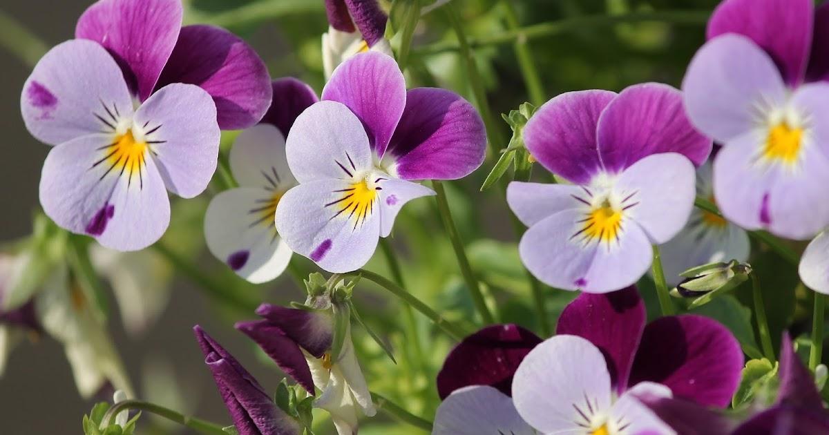Kumpulan Gambar Bunga Cantik Untuk Wallpaper Hd