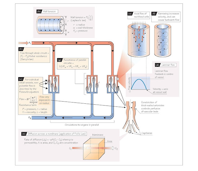 Principles Of Diffusion And Flow, Flow through a tube,