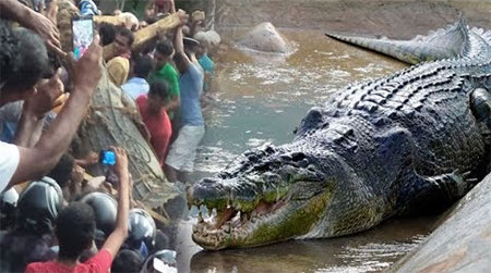 Amazing moment 17 foot long crocodile caught by villagers