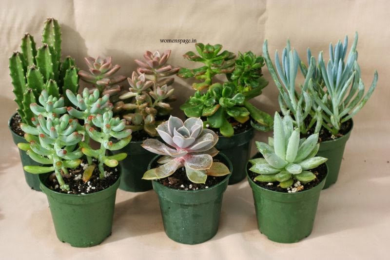 Succulent Plants Care