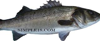 سمك القاروس