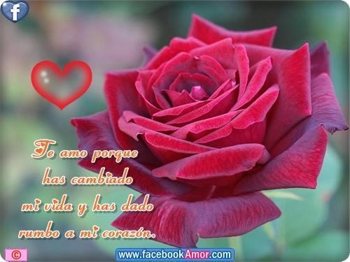 rosas bonitas para el amor