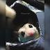 Bila Kesayangan Macam Tikus
