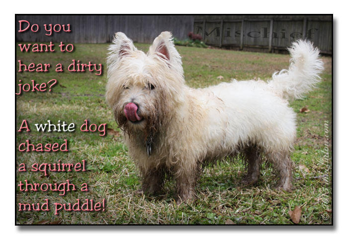 A dirty joke meme of a white dog in a mud puddle