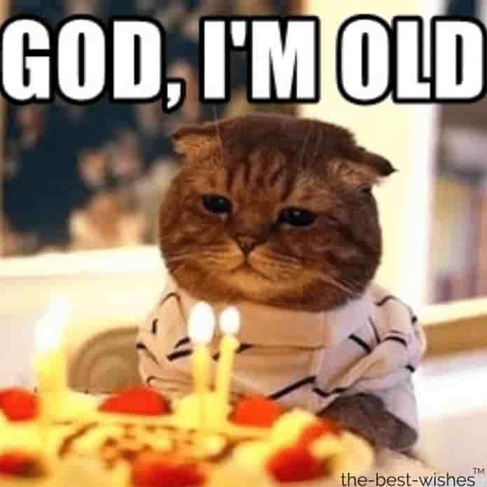 sarcastic cat memes